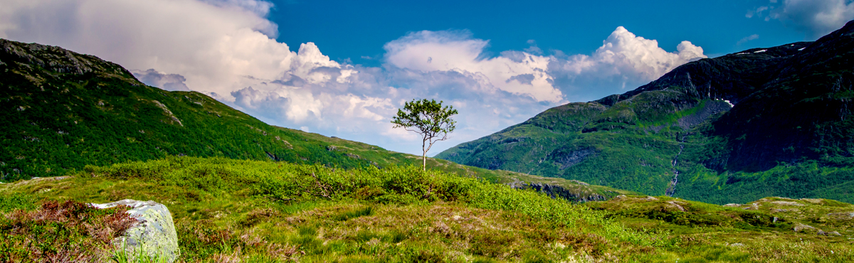 The lonely tree of Svartevatnet_1200x370